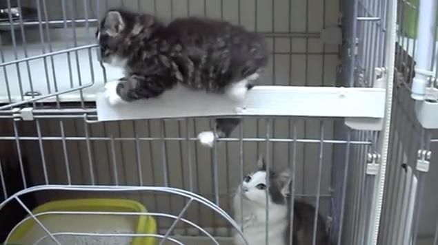 フチを伝い2階へと戻る子猫と見つめる母猫