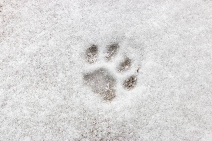 猫の足形の写真