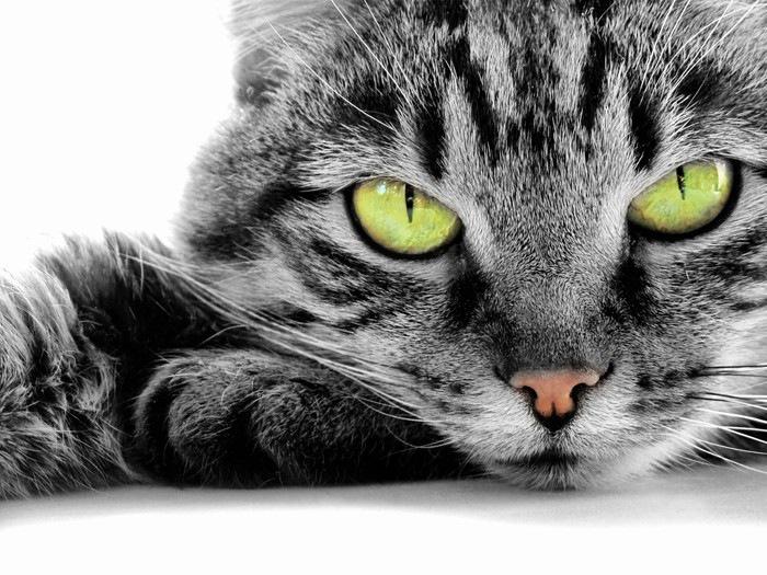 グリーンの猫