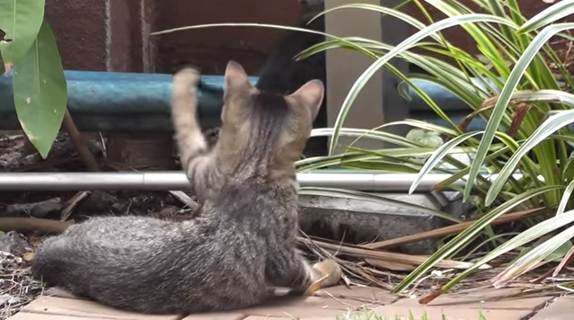 後ろ向きで手を上げる猫