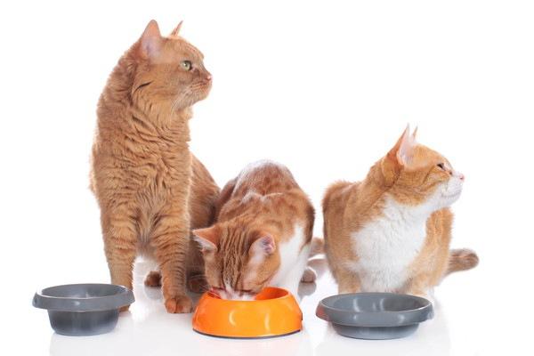 餌を食べ終えた3匹の猫