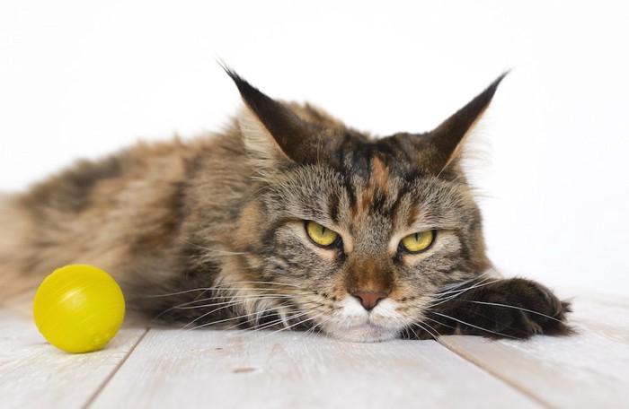 ボールの横でくつろぐ猫