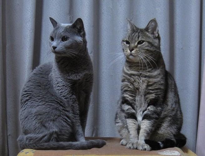 2匹の猫が斜めを向いている