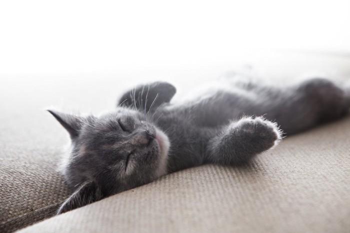 ソファーで仰向けで眠る子猫