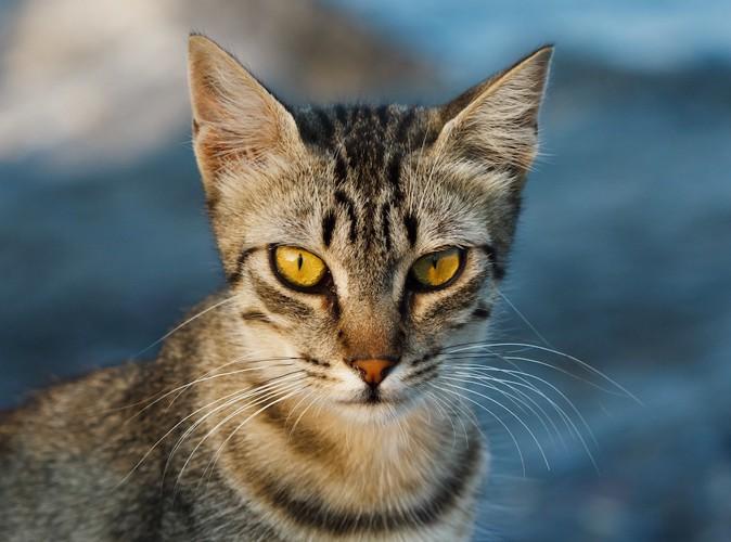額にM字のある猫