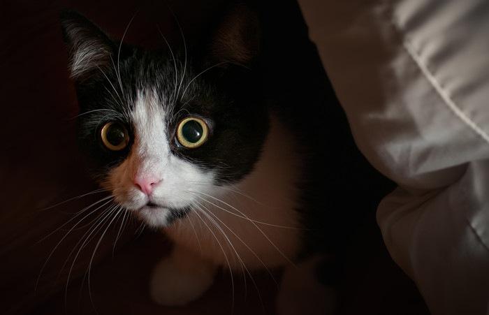 クッションの影の猫