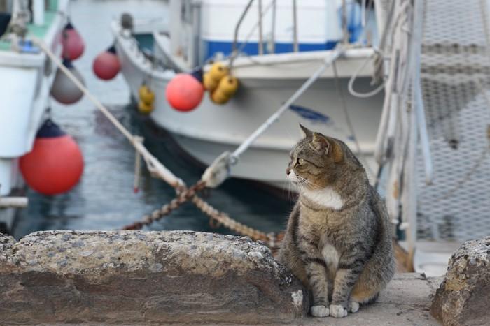 港に佇む猫