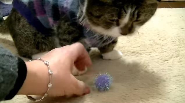 人の手と猫