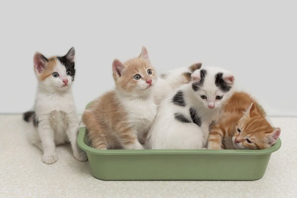 4匹の子猫が入っているトイレ