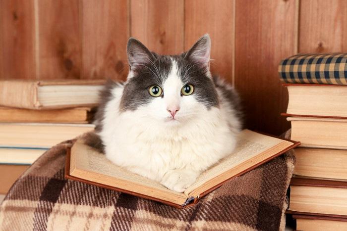開いた本の上にいる猫