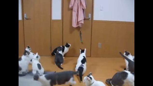 ぶら下がる猫じゃらしを見つめる猫たち