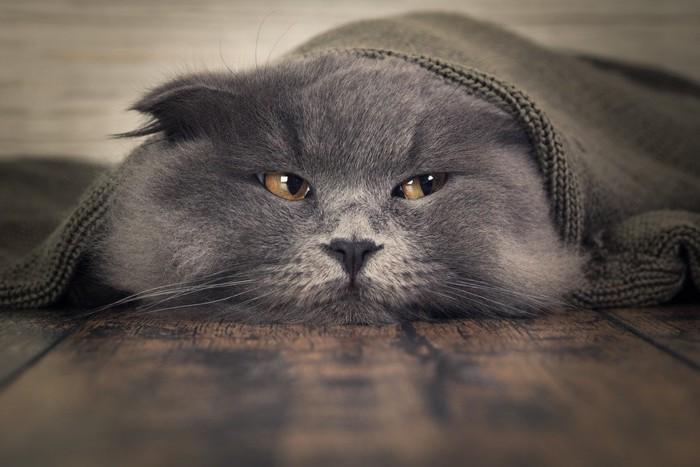 布を被っている猫