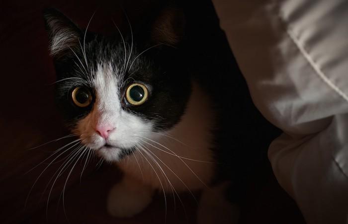 目を大きくして物陰に隠れる猫