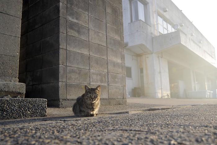 道に座り込む野良猫