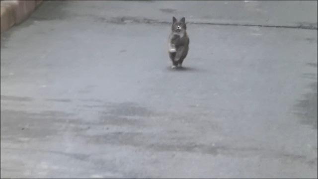 走って戻ってくる猫