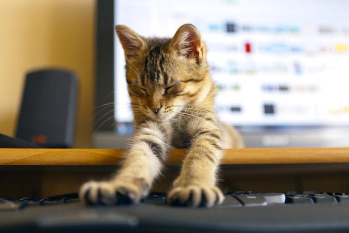 パソコンでくつろぐ猫