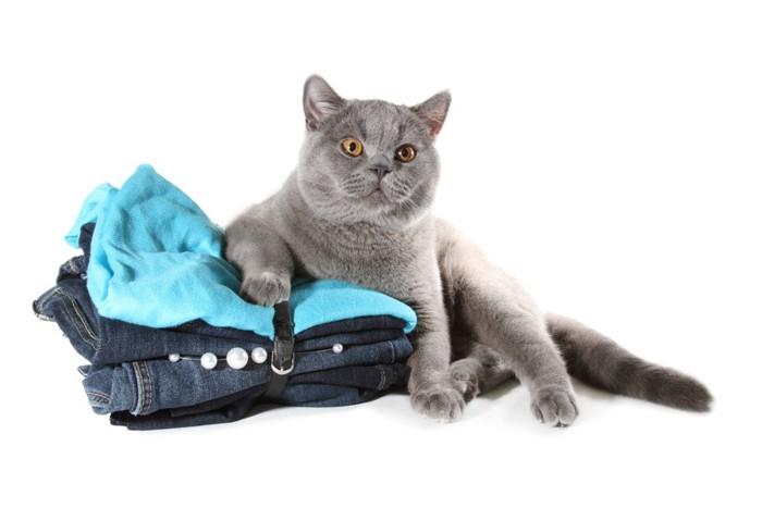 畳まれた服と猫