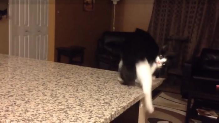 カウンターの端まできた猫