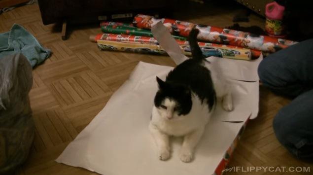 紙の上に伏せる猫