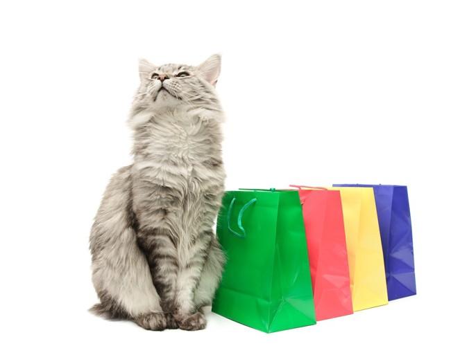 コンビニの袋と猫