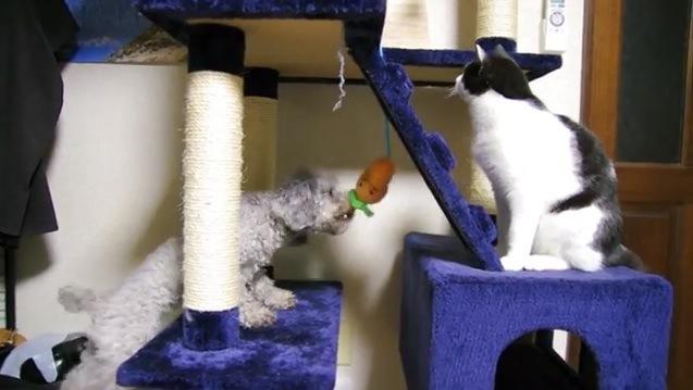 ニンジンをくわえようとする犬と上を眺める猫
