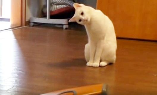 掃除機を不思議そうに見つめる猫