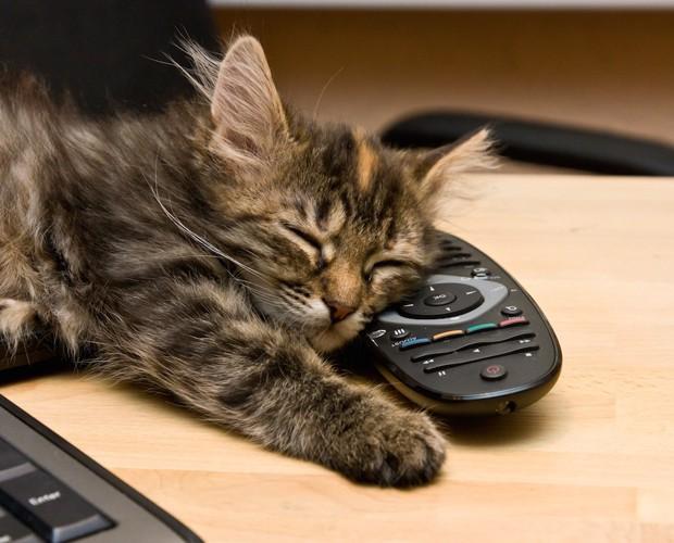 リモコンを枕にして眠る猫