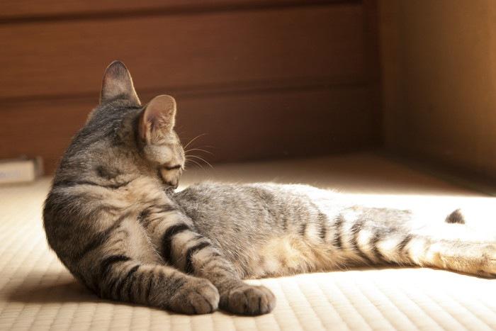 和室で寛ぐ猫の写真
