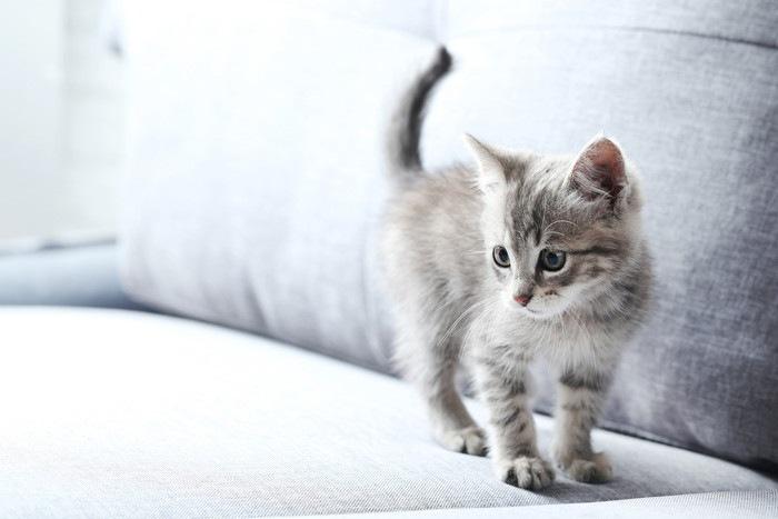 ソファの上の子猫