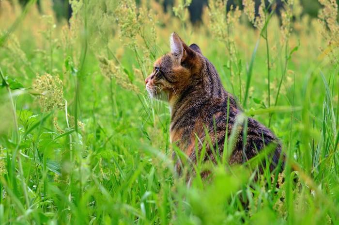 草むらの中で佇む猫