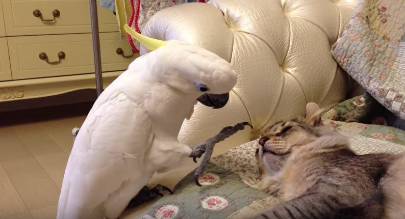 猫の鼻に近づくオウムの足