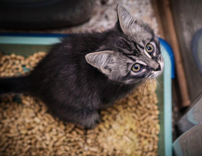 子猫と猫トイレ