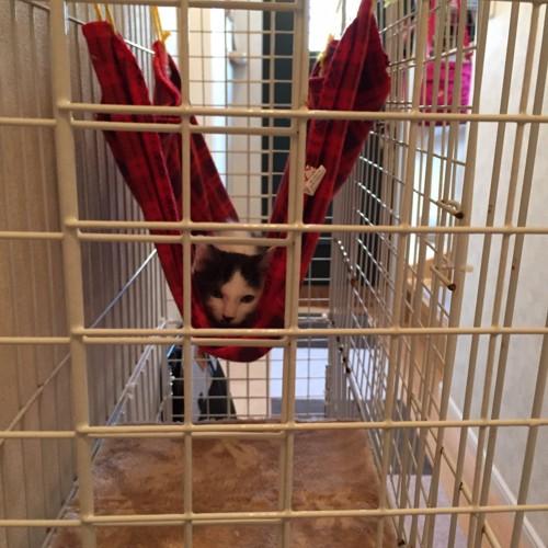 ケージの中に居る猫