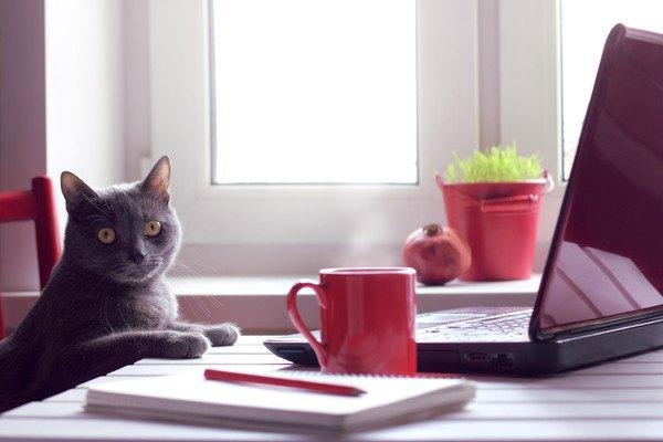 デスクに向かう肩こりかもしれない猫
