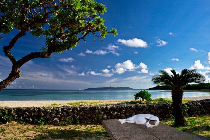 沖縄の猫島1