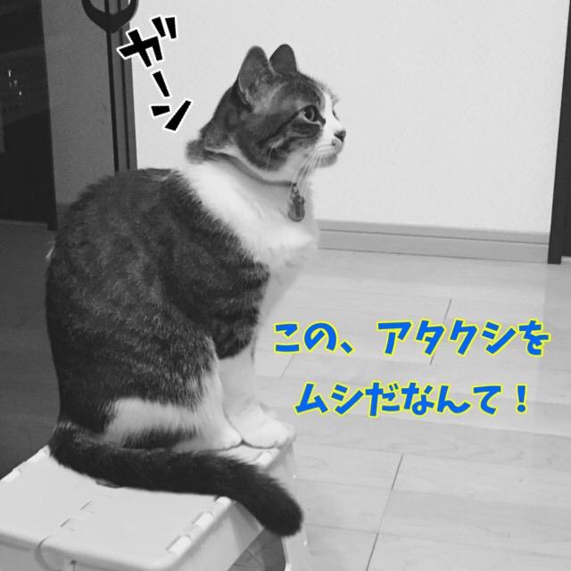 ショックを受ける猫