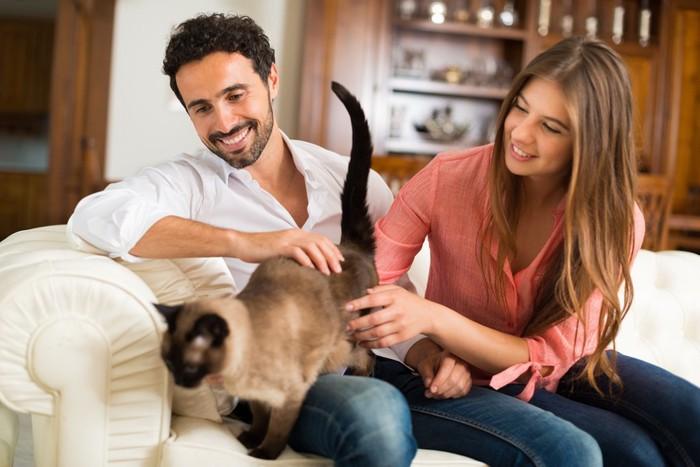 恋人達とじゃれる猫