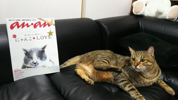 猫とanan