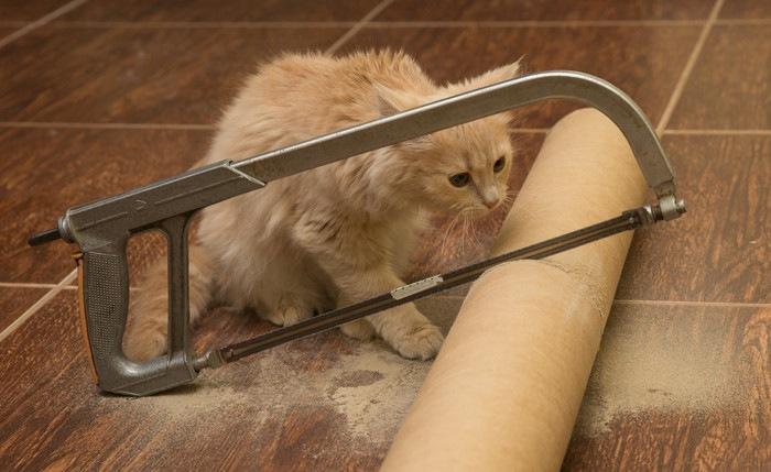 猫と糸のこ