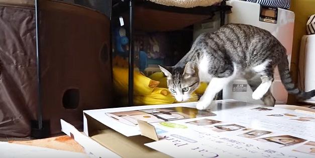 箱に乗る猫