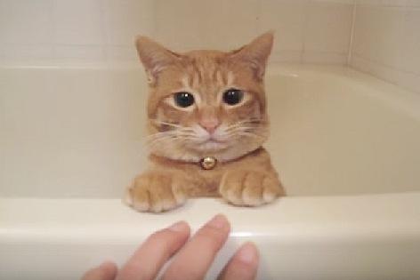 バスタブの縁に足を揃える猫