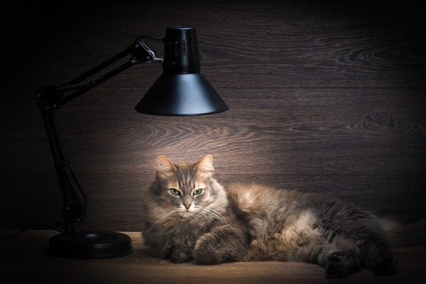 電気スタンドと長毛の猫
