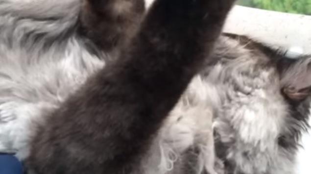 黒い猫の前脚のアップ