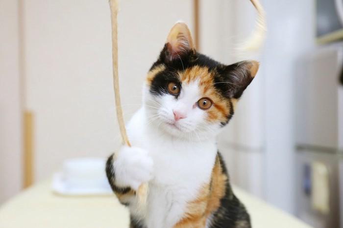 おもちゃの紐をつかむ猫