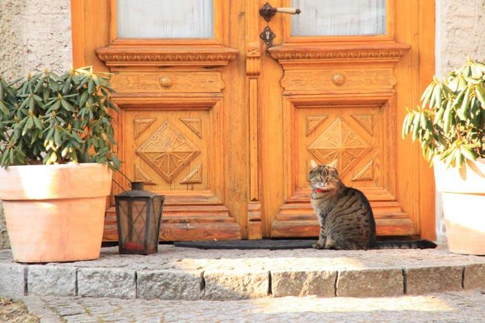 玄関前に猫