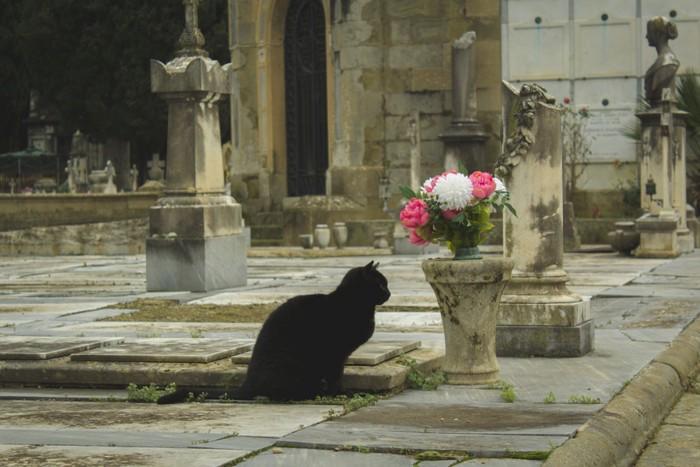 墓地にいる猫