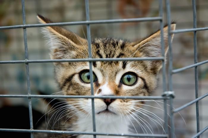 ケージに入っている子猫のアップ