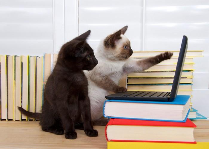 パソコンをいじる二匹の猫