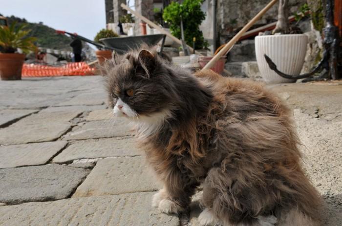 散歩中の長毛の猫