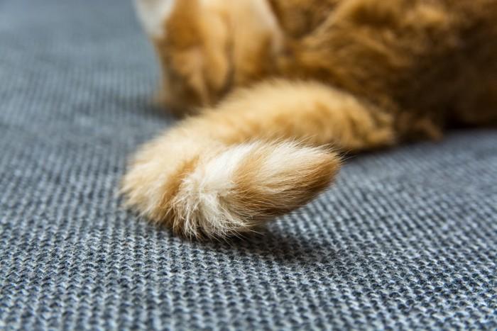 しっぽを見せている猫